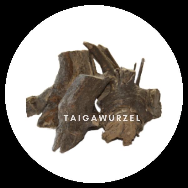Taigawurzel